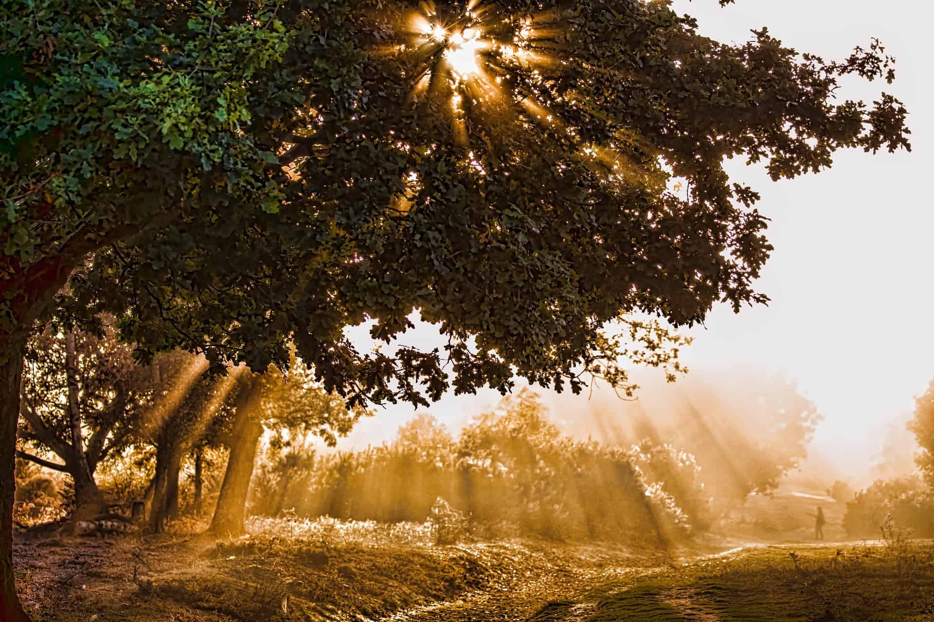 sunlight-2116161_1920.jpg
